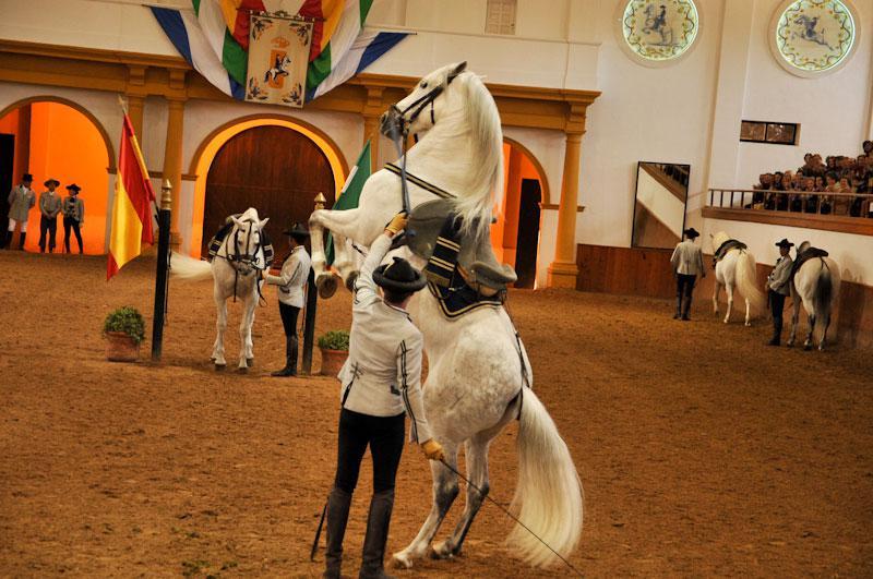 Museums Fundación Real Escuela Andaluza Del Arte Ecuestre