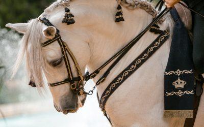 Ampliado el plazo para los cursos de Guarnicionería y Auxiliar de Equitación y Cría