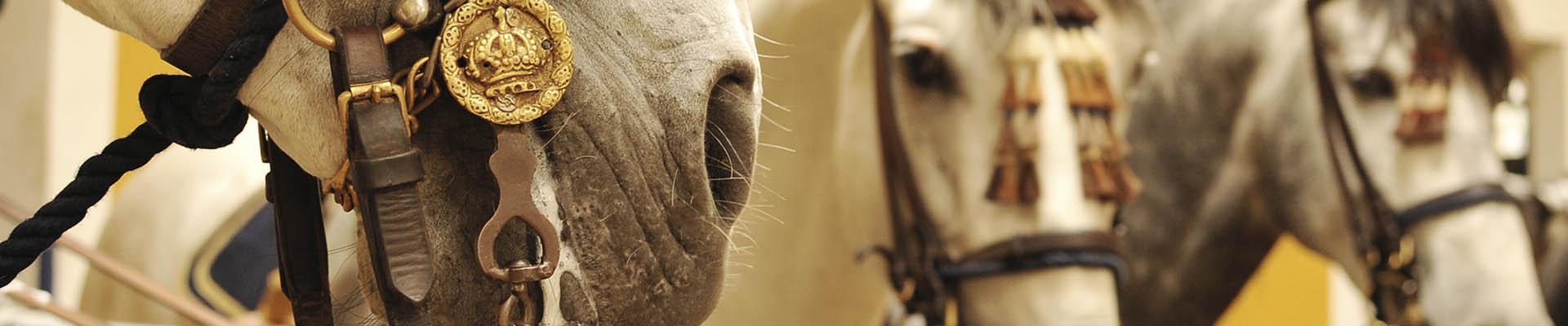 Cabecera caballo licitaciones